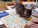 cat and scrabble