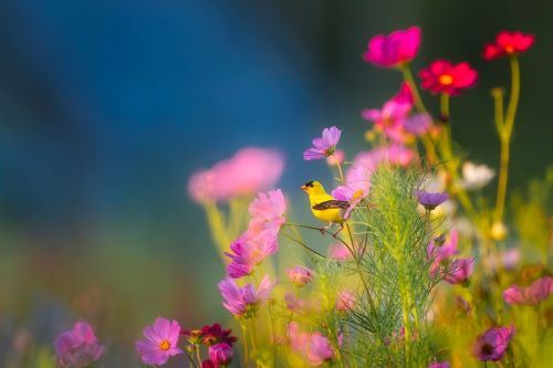 Pink flowers with a goldfinch